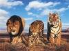 Reserva africana: los poderosos