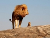 Reserva africana: porque ellos merecen respeto