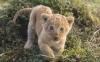 DaraSilverWolf21 - Lionzer jugador