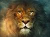 elmayx15 - Lionzer jugador