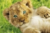 Fernanda_90 - Lionzer jugador