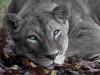 Rocio96 - Lionzer jugador