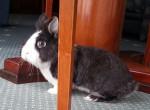 Conejo - Macho (3 años)