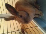 Conejo - (1 año)