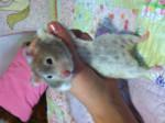 Hamster - (4 años)