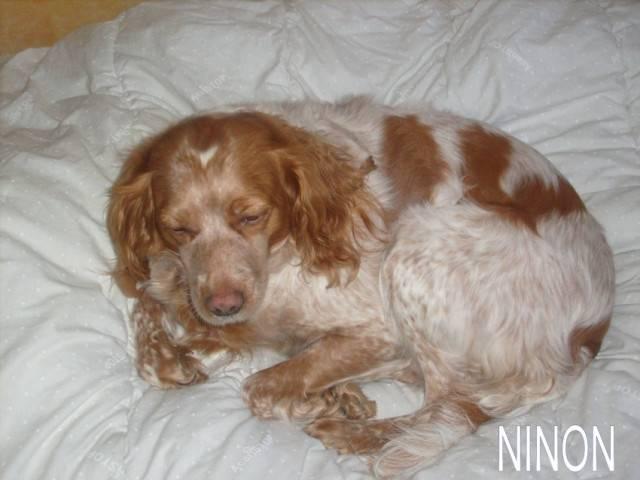 Perro - (4 años)