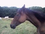Poney - (12 años)