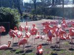 Flamingo Flamingos -   (Acaba de nacer)