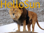 Lion - Macho (7 años)