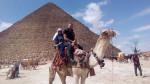 Dromedario Camel -  Macho (Acaba de nacer)